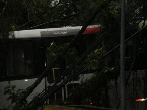 albero caduto in Rocinha #finestrasullafavela