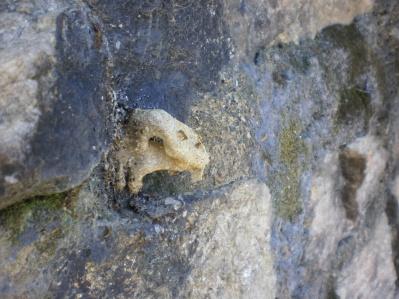 Fauna del nido d'aquila