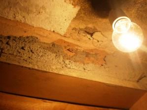 fauna del nido d'aquila: i gechi