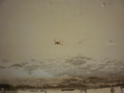 fauna del nido d'aquila: i ragni