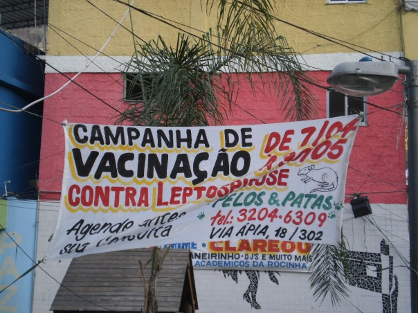 Leptospirosi topi favela rocinha