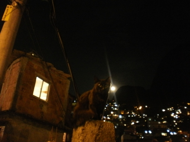 gatto notturno in favela rocinha #finestrasullafavela