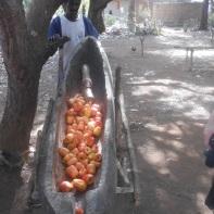 Si separa la noce dalla mela le quali vengono messe tutte in uno scivolo scavato nel legno.