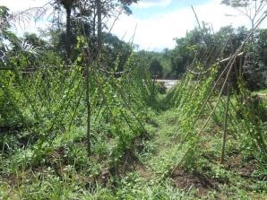 domenica del villaggio in Sierra Leone