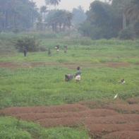 Il lavoro nelle piantagioni