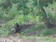 Mio papà si riposa un po' durante il lavoro sulla piantagione