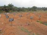 Rogbom Ebola cemetery – foto di Andrea Polo Un ricercatore infavela