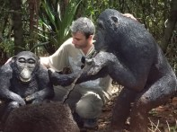 (questi sono finti e quello in mezzo non è uno scimpanzé) (foto di Andrea Polo)