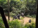 takugama il santuario degliscimpanzé
