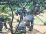 takugama il santuario degli  scimpanzé – foto di AndreaPolo