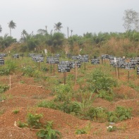 Ebola cemetery