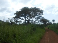 La via per Bumba