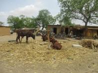 Kukarita il campo sfollati non ufficiale Nigeria nord-est