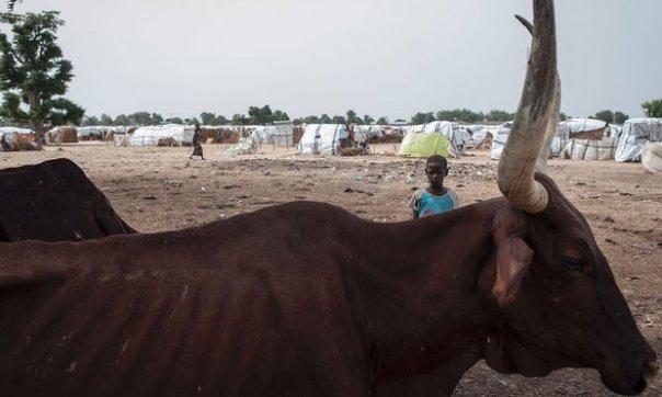 campo sfollati Nigeria