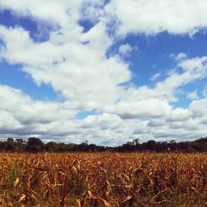 Trentaquattro Finestra su Longacres foto Zambia